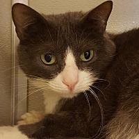 Adopt A Pet :: Faustyn - Grayslake, IL
