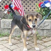 Adopt A Pet :: Oleo - West Chicago, IL
