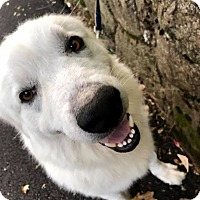 Adopt A Pet :: Mila RBF - Washington, DC