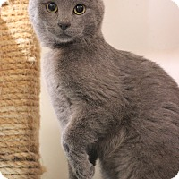 Adopt A Pet :: Sterling - Carlisle, PA