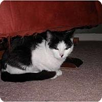 Adopt A Pet :: Dixie - Warren, MI