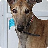 Adopt A Pet :: Kylie - Philadelphia, PA