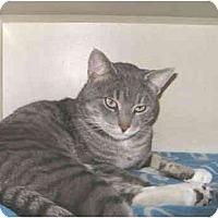 Adopt A Pet :: Buster - Mesa, AZ