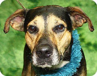 Shepherd (Unknown Type) Mix Dog for adoption in Jackson, Michigan - Bernie