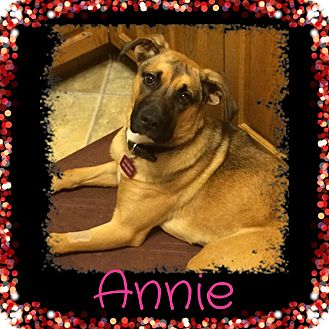 Shepherd (Unknown Type) Mix Dog for adoption in Regina, Saskatchewan - Annie
