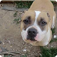 Adopt A Pet :: Missy - Big Rock - Sacramento, CA