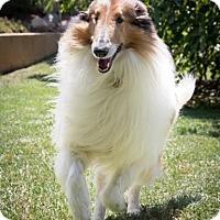 Adopt A Pet :: Rey - Riverside, CA
