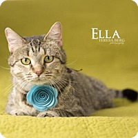 Adopt A Pet :: Ella - Dallas, TX