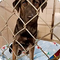 Adopt A Pet :: Serenity - ADOPTED! - Zanesville, OH