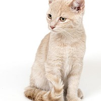 Adopt A Pet :: Tad - Lombard, IL