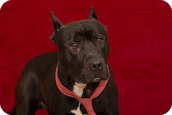 Terrier (Unknown Type, Medium) Mix Dog for adoption in Flint, Michigan - Ty