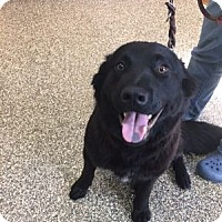 Adopt A Pet :: Buster - San Francisco, CA