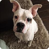 Adopt A Pet :: Annabeth - Austin, TX