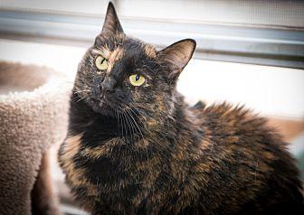 Domestic Shorthair Cat for adoption in New York, New York - Thumbelina