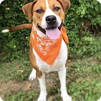Adopt A Pet :: Diamond - Lakeland, FL
