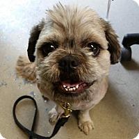 Adopt A Pet :: Monkey - Franklin, NH