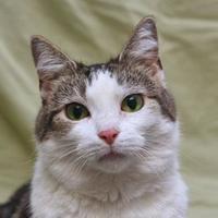 Adopt A Pet :: Dawn 74 + - Mentor, OH