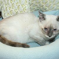 Adopt A Pet :: Marilyn - Santa Rosa, CA
