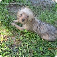 Adopt A Pet :: Chickasaw - West Warwick, RI