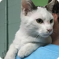 Adopt A Pet :: Spitfire - Newport, NC