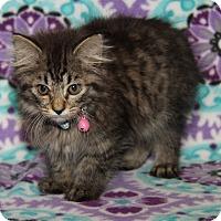 Adopt A Pet :: Eileen - Marietta, OH