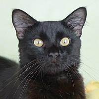 Adopt A Pet :: Xavier - Columbia, IL