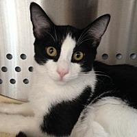 Adopt A Pet :: Max - Alamogordo, NM