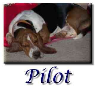 Basset Hound Dog for adoption in Marietta, Georgia - Pilot