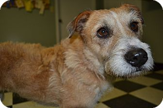 Wirehaired Fox Terrier/Terrier (Unknown Type, Small) Mix Dog for adoption in Marietta, Georgia - Mallory