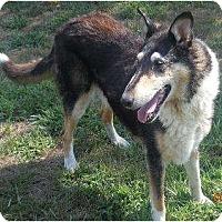 Adopt A Pet :: Basie - Minneapolis, MN