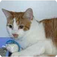 Adopt A Pet :: Dallas - Arlington, VA