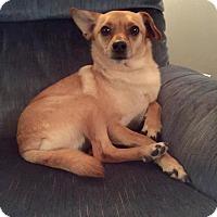 Adopt A Pet :: Bean - Saskatoon, SK