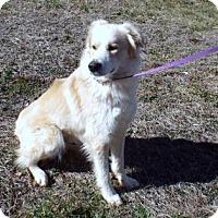 Adopt A Pet :: Scout - Murphy, NC