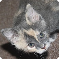 Adopt A Pet :: Blaze - Loveland, CO