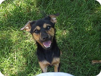 Terrier (Unknown Type, Small) Mix Dog for adoption in Marshall, Texas - Bubba