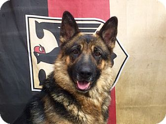 German Shepherd Dog Dog for adoption in Portland, Oregon - Gypsy
