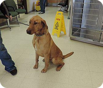 Golden Retriever/Labrador Retriever Mix Dog for adoption in Sioux City, Iowa - JAKE