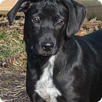 Adopt A Pet :: Blitzen - Elmwood Park, NJ