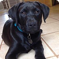 Adopt A Pet :: Bert - Knoxville, TN