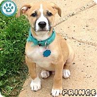 Adopt A Pet :: Prince - Kimberton, PA