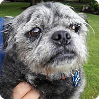 Adopt A Pet :: Lulu - Salem, OR