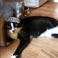 Adopt A Pet :: Penny - Clarksville, TN
