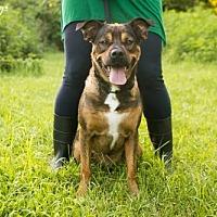 Adopt A Pet :: Friday - White Hall, AR