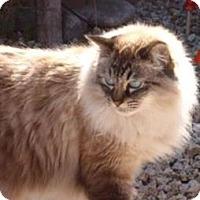 Adopt A Pet :: Rajha - Gilbert, AZ