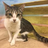 Adopt A Pet :: Mary - Tangent, OR