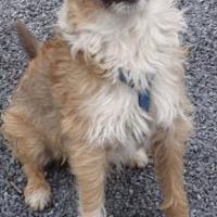 Adopt A Pet :: Gibson - Stroudsburg, PA