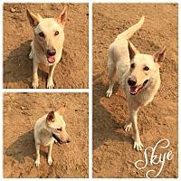 Adopt A Pet :: Skye - Hope, BC