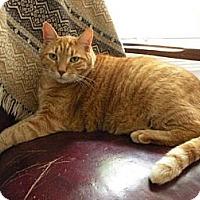 Adopt A Pet :: Raja - Rohrersville, MD