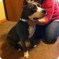 Adopt A Pet :: Bella - Roaring Spring, PA