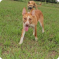 Adopt A Pet :: Emily--reduced fee to $200 - Allentown, PA